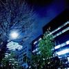 街路樹の明かり