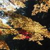 紅葉をもとめ日光山内を歩く
