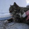 2月前半の #ねこ #cat #猫 その2