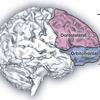 """超訳「サイコパス -冷淡な脳-」 """"サイコパスの神経学的仮説"""""""
