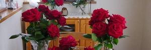 【60代・引きこもり主婦の日常】バラの季節が今年もやってきました。