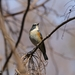春の陽気に包まれて 渡る鳥 留まる鳥