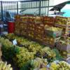 「バナナ・バナナ・スイカ」マナウスの市場がすごかった!part2【ブラジル旅行記】【マナウス編】