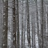 飛騨の冬景色 【平湯峠付近】