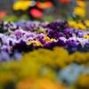 435  谷間の花