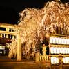 大石神社のしだれ桜@2017