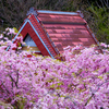 京都・花脊 - 花脊の里の春