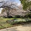 4月3日 嘘のような春の陽気