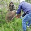 印旛沼周辺のカミツキガメ根絶へ、捕獲戦略策定