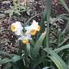 「合唱入門」から3週間 ~♪花は咲く (東日本大震災復興支援ソング)、♪卒業写真 (荒井由実)、♪アムール河の波」(ロシア民謡) etc. の練習に励んでいます。