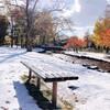 紅葉と雪のコラボ 【 札幌暮らし 】雪がうっすら積もりました