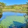 見島の棚池(山口県見島)