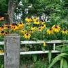 会社周辺を歩いていたら夏の花ひまわりに似た植物が咲いていました。