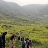 上海発「覆卮山」日帰りツアー参加~満開の菜の花と氷河期時代の遺跡