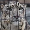 動物の写真集@北海道・旭山動物園/ オリンパスOMD-EM10