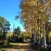 秋の森の中をおさんぽ