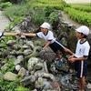 メダカ池の掃除(4年)