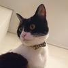 今日の黒猫モモ&白黒猫ナナの動画ー842