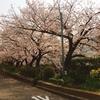 桜の見方をご存知ですか?