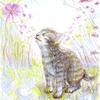 封筒「秋桜」
