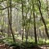 【櫛形山】2016年7月19日 高い登山口から楽ちんハイキング。そして静かな森に生えるとろろ昆布《日帰り登山》