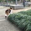 元町の石川町駅近くにある花屋さんが気になっている