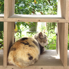 ネコの楽園!青島潜入レポ