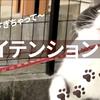 【猫のチャレンジ #34】