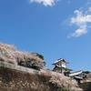 2020年石川門の桜