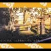 動物園好きから見たけものフレンズ―君はどうぶつえんがすきなフレンズなんだね!すっごーい!―(けものフレンズ1話)【2017冬アニメ感想】