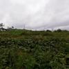 雨上がりの20km走からの釧路町森林公園