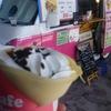 大阪南港にあったクレープ屋でデザートを食べてきました。チョコと生クリープが沢山詰まって美味しくてオススメです!