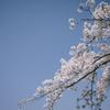 【写真】桜は来年撮りましょう(2020/04/04)
