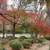 散歩~(日比谷公園)なぜ赤くなる?紅葉のしくみ