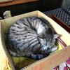 岩合光昭・世界ネコ歩きに登場した豆屋さんのかわいい猫店長