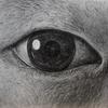 鉛筆で超リアルな「目」の描き方【メイキング動画あり】