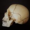 ひょっとしてあなたの「頭がい骨」歪んでいませんか?