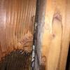 新潟市で雨漏り調査!アリの居た形跡が・・。