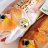 2021年4月26日 小浜漁港 お魚情報