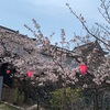 岸和田城のお城まつりへ行ってきました