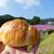 ダンケンの塩パンを朝露煌めくコスモス畑で@鹿児島市下福元町