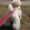 ~小型犬の散歩の適正な距離について~
