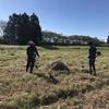 学外の畑でひまわりの刈取り!