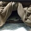 【うさぎ】コタツの中で何してるか覗いてみた。