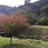 自然界の色が教えてくれること@熊本県