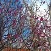 春にむかう身体