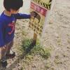 【2歳9ヶ月】最近反省したこと & 図鑑購入