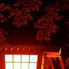 今朝は住吉神社からスタート