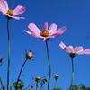 10月7日花と花言葉・歌句