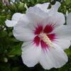 頭頂の翳(かざ)しの花